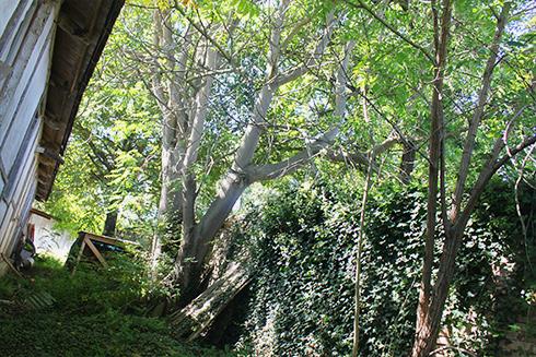 trees_r72