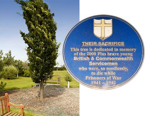 arboretum-tree_r72